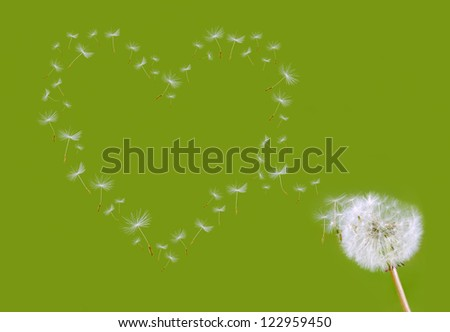 dandelion seed head shapes a heart before green background