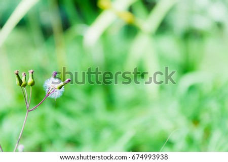 Dandelion Seed in The Wild #674993938