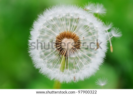 Dandelion seed outdoors - stock photo