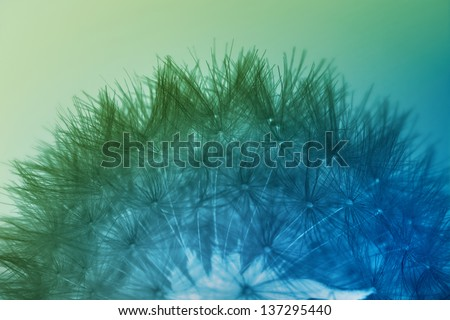 Dandelion seeds in blue and green