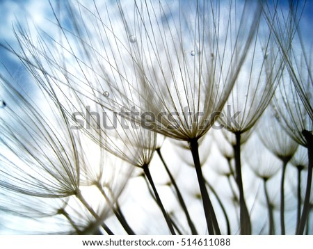 dandelion seeds, with tiny depth of field - Shutterstock ID 514611088