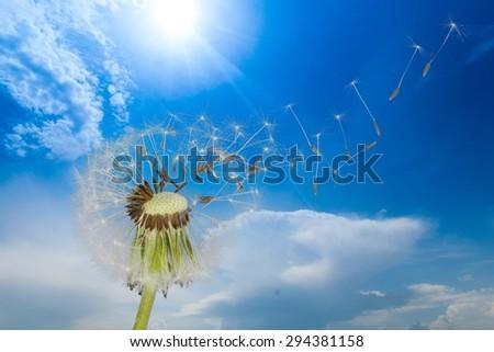 Dandelion, Wishing, Human Fertility.