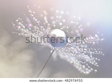 Dandelion with drops of dew in a silver color. Water drops on a parachutes dandelion on a beautiful silver background. Soft dreamy tender artistic image snowflake. Macro.