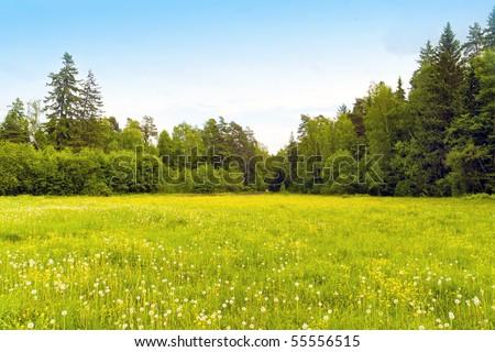 dandelions #55556515