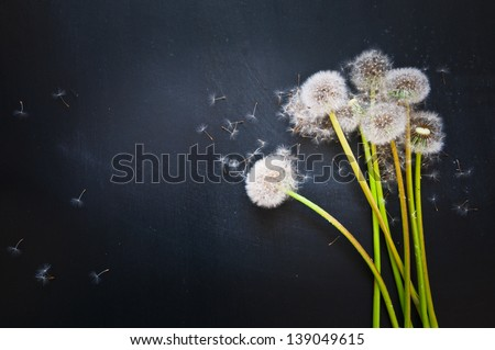 dandelions and flying seeds on a black background