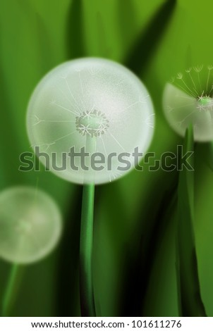 Dandelions in the grass. Digital image