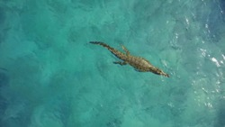 Dangerous and scary crocodile swims in the ocean. Concept undersea world.