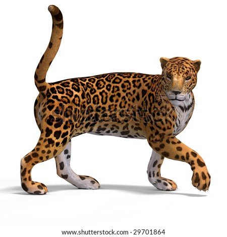 Dangerous Big Cat Jaguar With Clipping Path Over White