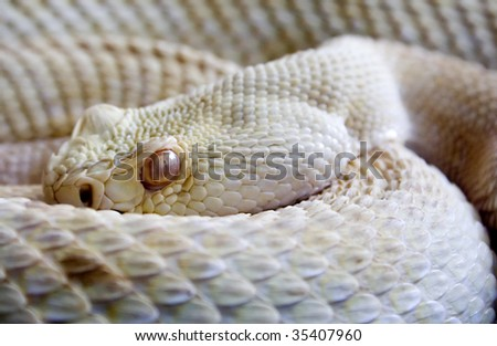 Dangerous snake - stock photo