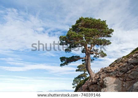 Dangerous tree located on a cliff with a beautiful sea of clouds background