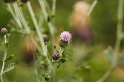 Danish wild flowers in a field