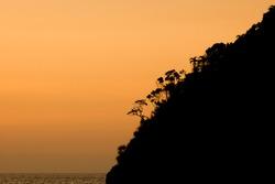 Danjugan tropical island sunset silhouette of palm trees. Negros, Philippines, April