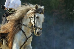 Dapple-grey Andalusian horse back  riding portrait near the ranch