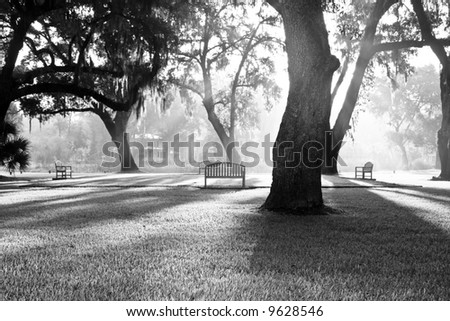 dappled morning sunlight coming through the trees of park, black and white - stock photo