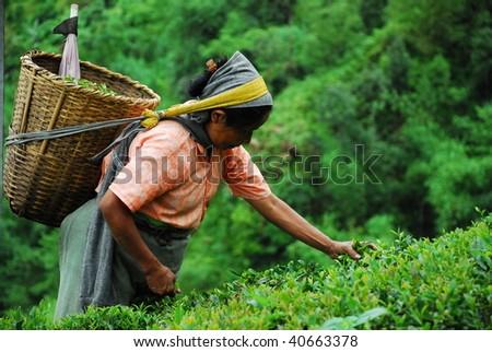 Tamil gotamilgod for Terrace meaning in tamil