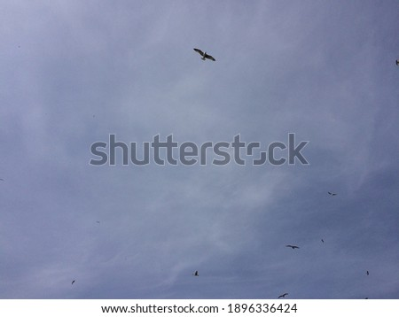 Dark and blue sky with flying birds. Stok fotoğraf ©