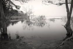 dark and deserted island on sea or lagoon and lake scary with die and dry tree branch for horror and ghost devil feeling or scene on halloween with vignetting