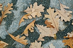 Dark and light grey texture of gravel pavement with dry beige oak leaves / shapes on the ground