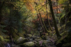 Dark and mysterious rocky gorge in autumn coloured forest in Scottish Highlands.Tranquil and ethereal woodland landscape scene with atmospheric mood.Beauty in nature.