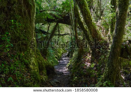 Dark and over grown jungle path leading through the rain forest of queulat national park towards ventisquero colgante at the Carretera Austral in Patagonia, Chile, South America Foto stock ©