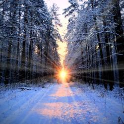 Dark atmospheric landscape of snow-covered evergreen forest at sunset. Pathway, rural road. Golden sunlight, sunbeams. Pine, fir, spruce trees. Winter wonderland. Ecology, global warming, ecotourism