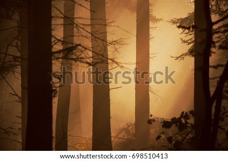 Dark autumn forest with tree, light and mist