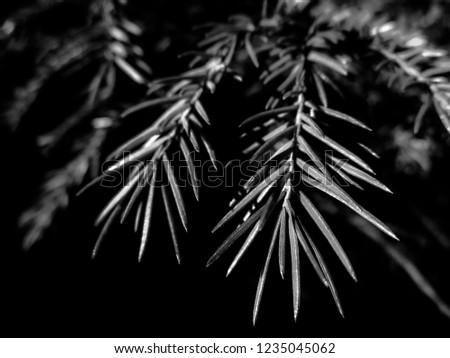 Dark b&w christmas tree - holiday christmas card. Background and Texture