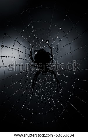 Dark black spider in a web with water drops