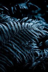 Dark blue background. Fern plant leaf background. Royal blue fern background. Tropical fern grass mood. Brake foliage. Bracken plant. Foliage wall decor. Botanical summer season garden.