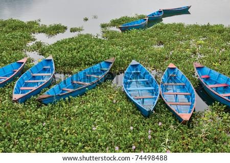 Dark blue boats in water hyacinths. Pheva Tal lake in Pokhara, Nepal.