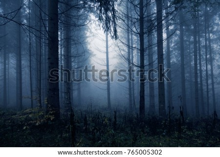 Dark blue colored spooky and misty conifer forest tree landscape. Blue color filter effect used.