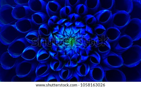 Dark blue dahlia flower macro photo. Picture in color emphasizing the blue colours and green highlights in an intricate geometric biologic pattern of a dahlia flower head center.