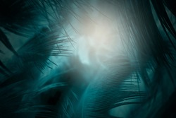 Dark blue green feather texture pattern background with lighting