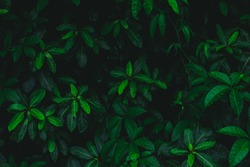 Dark botanical background, tropical leaves, color tone, faded