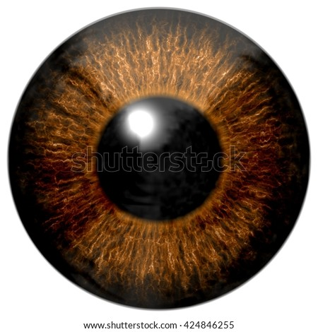 Stock Photo Dark brown eye
