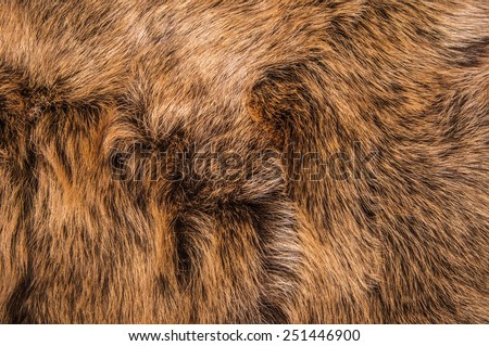 Dark Brown Fur Natural, Wolf Fox, Animal Wildlife Hair Fur / Concept and Idea Style for Background, textures and wallpaper. Close up Full Frame.