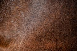 Dark brown horse's skin for background