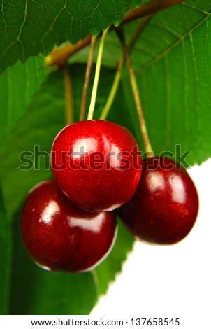 dark cherries on white background - stock photo