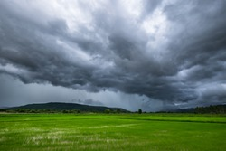 Dark clouds and rain storm over the rice field, rainy season in Thailand
