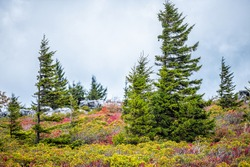 Dark cloudy sky in Dolly Sods, Bear Rocks trail in West Virginia with autumn orange and red foliage leaves on wild blueberry bushes and windswept pine trees on peak