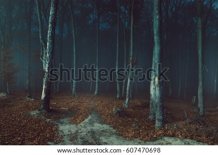 Stock Photo Dark creepy fog in the forest