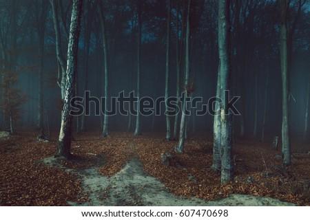 Stock Photo Dark creepy fog in the forest