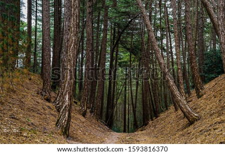 Dark deep forest trail view. Forest trail view. Forest trail scene. Deep forest trail