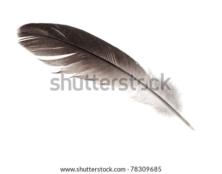 dark feather isolated on white background #78309685