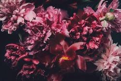 Dark Floral macro background. Buds and petals of beautiful peonies on black. Peonies in surreal colors.