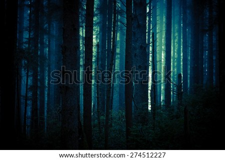 Dark, Foggy and Creepy Forest in Dark Blue Color Grading. Forest Backdrop. #274512227