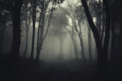 dark foggy forest after rain