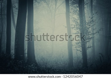 dark foggy forest background #1242056047