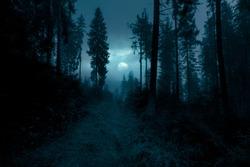 Dark, foggy, mysterious forest. Full moon on the sky. Halloween backdrop.