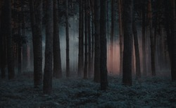 Dark foggy pine scary forest